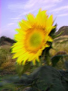 freetoedit 3d flower sunflower