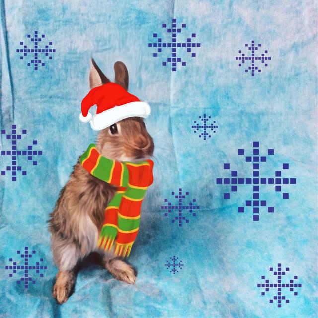 #FreeToEdit #rabbit #edited #cold #christmas