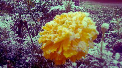 freetoedit winter flower