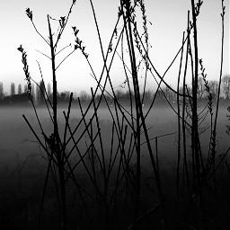 bnw_captures bnwlover naturephotography