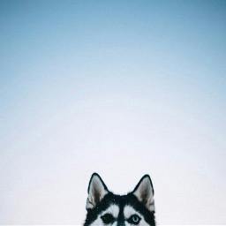 freetoedit dog sky