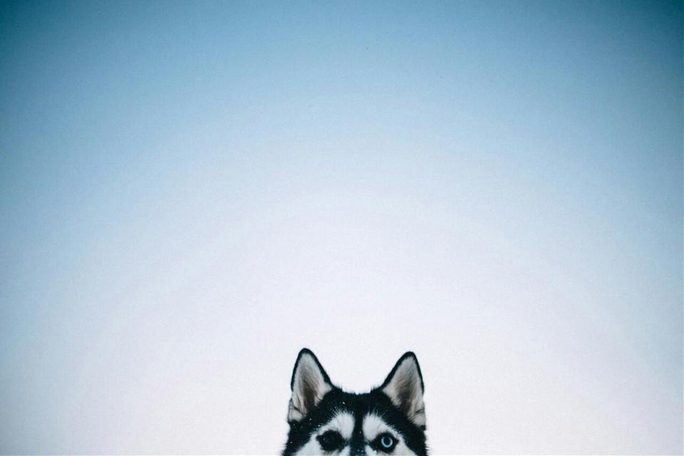 #FreeToEdit  #dog  #sky