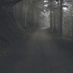 photography photographylife forest road dark