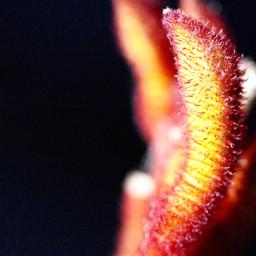 freetoedit nature naturephotography flower macro