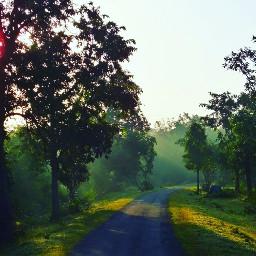 freetoedit nature tree landscape landscapephotography