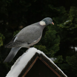 freetoedit photography winter