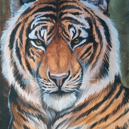 tiger drawing painting traditionalart petsandanimals art myart