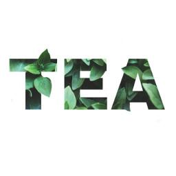 FreeToEdit tea spillthetea plant leaves