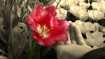 friendship flower naturephotography nature sweetness freetoedit