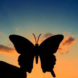 butterfly butterflies butterflys nature natureza