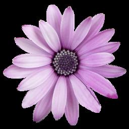 freetoedit flower png transparent