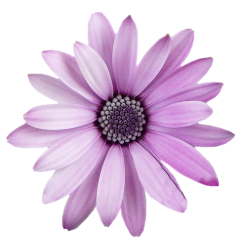FreeToEdit Flower Png With Transparent Background