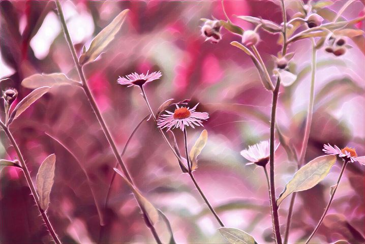 freetoedit flower nature photography spring