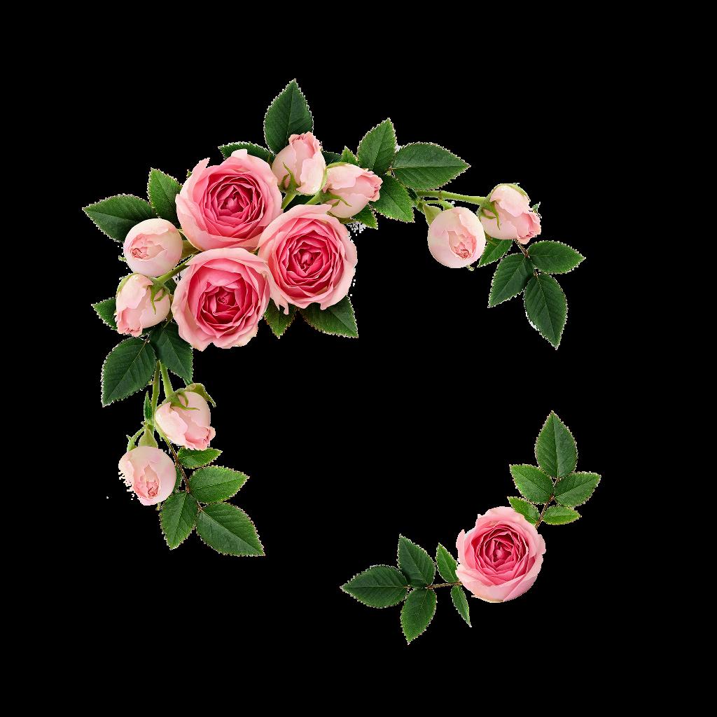 Com Frame Apps Nature Flower Photo Frame
