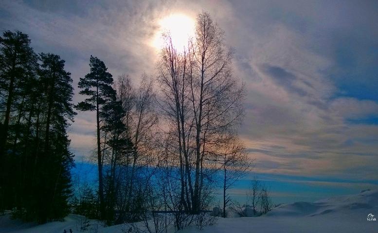 landscape winter tree sky photography