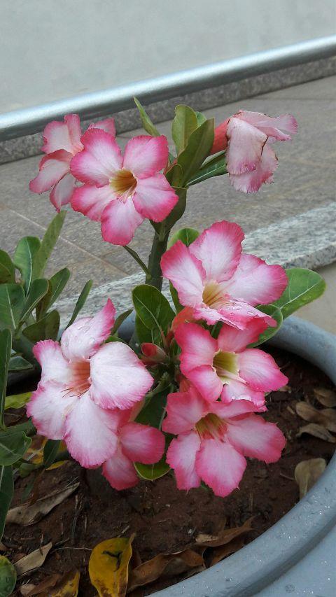 freetoedit nature nofilter noedit flower