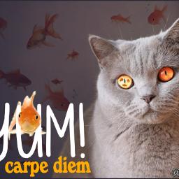 remixed cats goldfish bestdayever carpediem freetoedit