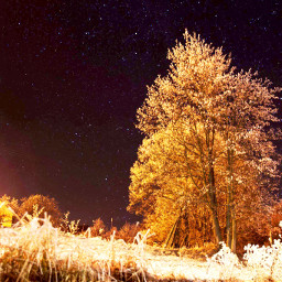 nature astrophotography photography canon tree freetoedit