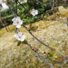 beautifulflowers beautifulnature blossom spring nature
