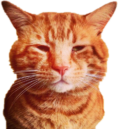 freetoedit ftestickers cat animals