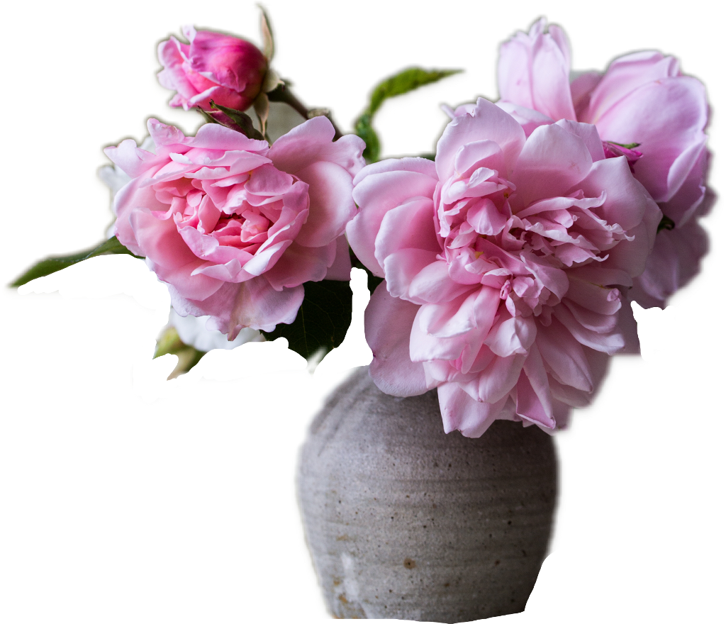 #FreeToEdit #ftestickers #rose #pink #flower