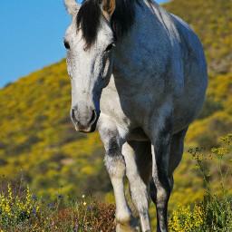 horses beauty nature animallovers horselovers