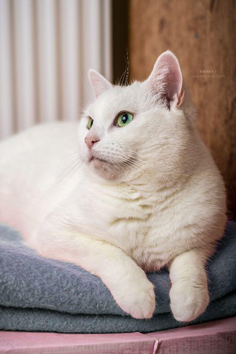 cat cats petsandanimals pet animal