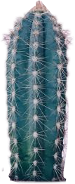 cactus plant freetoedit