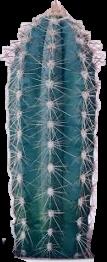#cactus #plant