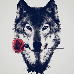 rose wolf blackandwhite FreeToEdit