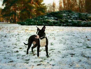 winter snow frozen dog