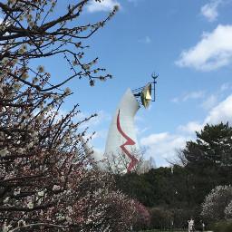 japan osaka plumblossom bluesky park