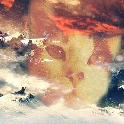 freetoedit cat kitty adobephotoshop edited