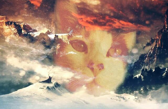 #FreeToEdit #cat #kitty #adobephotoshop #edited