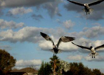birds photography pets nature